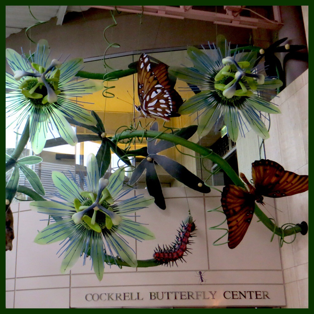 Houston Museum Of Natural Science Butterfly